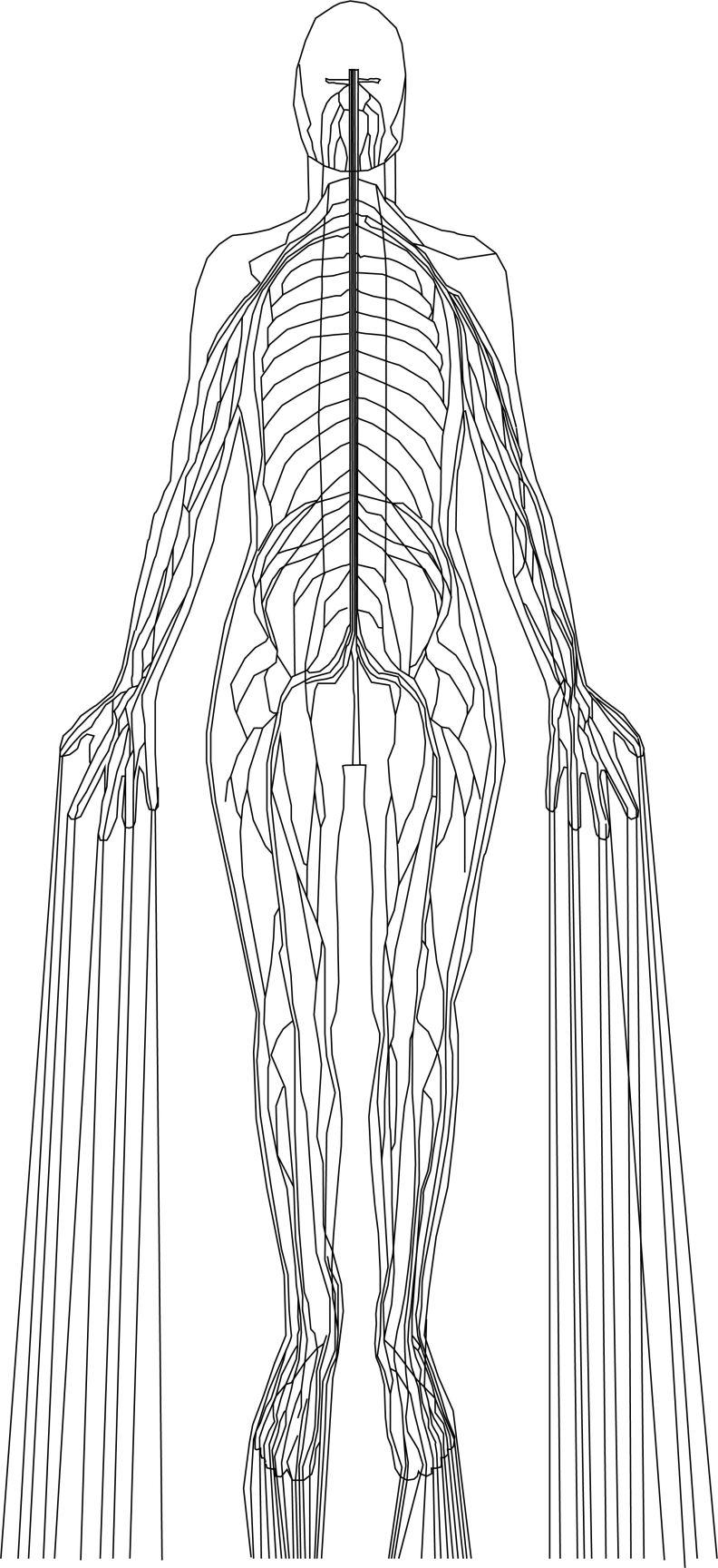 NerveSystem
